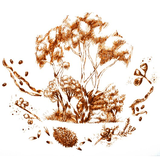 Imagining Pink Gum Woodland, based on local seeds we've gathered. (Illustration by Joel)