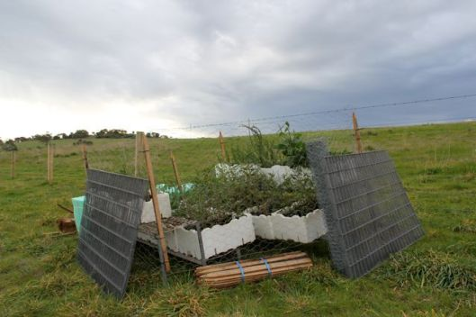 Temporary, roo-proof nursery for storing seedlings on location