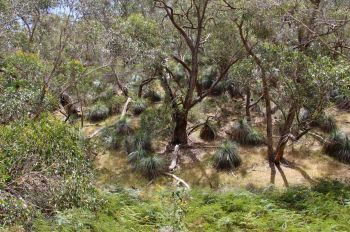 The dense yakkas and stringybark of a southern slope